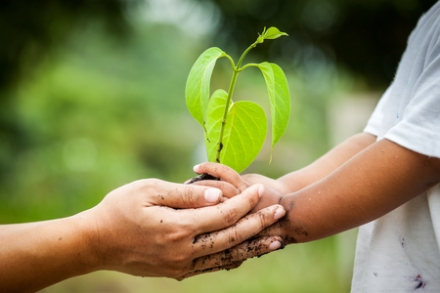 45325721 - child with parents hand holding young tree in soil together for prepare plant on ground,save world concept