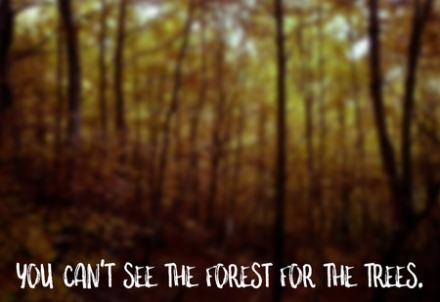 60558493 - you can't see the forest for the trees